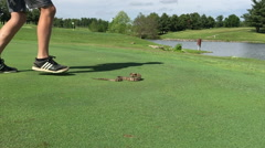 Snake on green of golf course Stock Footage