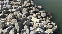Large momma snake crawling along rocks by other snakes Stock Footage