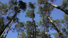 Treetop view from the bottom - stock footage