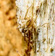 Brown spider on tree - stock photo