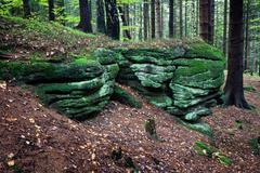 Mossy Boulders in the Forest - stock photo