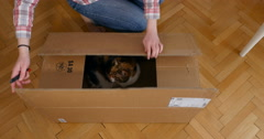 Woman unboxing box with cat Stock Footage