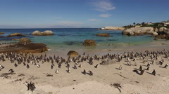 African penguins, Boulders beach, Western Cape, South Africa Stock Footage