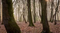Time lapse of morning forest in Sprielderbos en Speulderbos Stock Footage