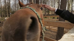 The horse in zoo, at spring Stock Footage