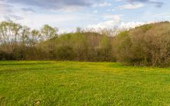 Spring Meadow Surrounded by Trees and Shrubs Stock Photos