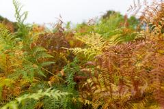 Multicolored Autumn fern Stock Photos