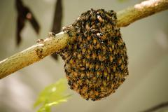 Little wild hive with bees - stock photo