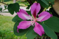 beautiful pink tropic flowers on tree - stock photo