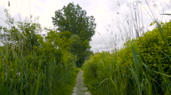 Path in the wild vegetation Stock Footage