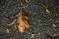 Dry brown leaf on gravel stone texture. - stock photo