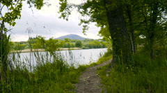 Vegetation and path by the river Stock Footage