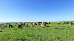 Sheep and goats in the countryside from Portugal Stock Footage