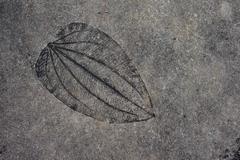 Leaf imprint on cement texture background Stock Photos