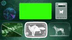 Fennec fox - Animal Monitor - Bone scanning - World search - green Stock Footage