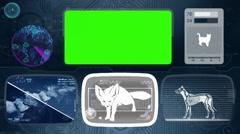Fennec fox - Animal Monitor - Bone scanning - World search - blue Stock Footage