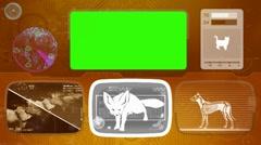 fennec fox - Animal Monitor - Bone scanning - World search - orange - stock footage