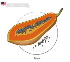 Fresh Papaya, A Famous Fruit in Malaysia - stock illustration