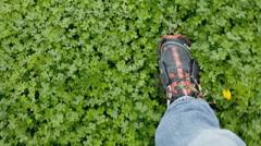 Grass feet walking pov nature Stock Footage