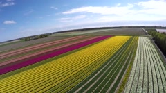 Aerial overview of beautiful colorful tulip field moving over rainbow of color Stock Footage