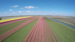 Aerial of beautiful colorful tulip field overview above showing colors Stock Footage