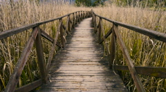 Wooden path and cane thicket Stock Footage