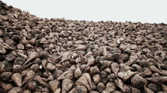 The harvest of sugar beet - stock footage