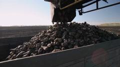 The harvest of sugar beet - stock footage