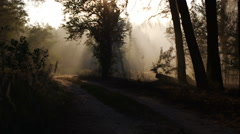 Smoke from forest fire moving with wind. Forest road, trees, sunset, sun rays Stock Footage