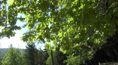 Under the Trees Stock Footage