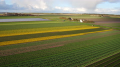 Aerial view of Dutch Tulips from the Netherlands Stock Footage