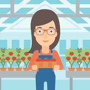 Farmer collecting tomatos - stock illustration