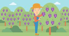 Farmer collecting grapes - stock illustration