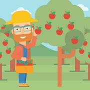 Farmer collecting apples Stock Illustration