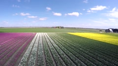 Aerial drone moving backwards above flower field beautiful colors Stock Footage