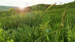 Summer meadow close up, soft sunset light Stock Footage