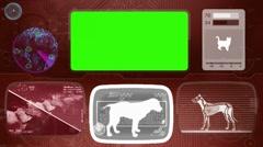 Beagle - bloodhound - brittany  - irish setter - dog - Animal Monitor - red 0 Stock Footage