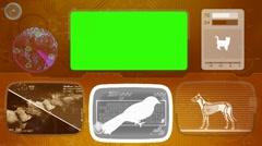 Bird - Animal Monitor - Bone scanning - World search - orange 02 - stock footage