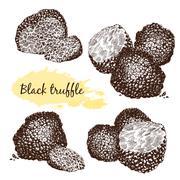 Black truffles  group - stock illustration
