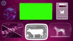 Cow - Animal Monitor - Bone scanning - World search - purple 02 Stock Footage