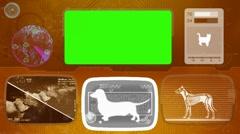 dachshund - dog - Animal Monitor - Bone scanning - World search - orange 01 - stock footage