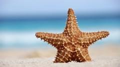 Starfish on caribbean sandy beach Stock Footage