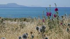Greece Crete coastal view with hollyhocks Stock Footage