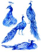 Set of watercolor blue peacocks - stock illustration