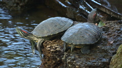 turtle near the water - stock footage