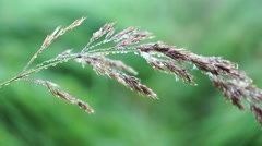 A blade of grass in the dew, macro video - stock footage