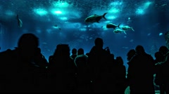 Silhouettes of people in aquarium - stock footage