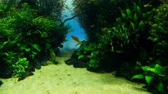 Oceanarium with many different species of fish Stock Footage