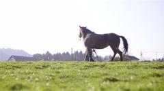Trainer pulling leash hard to punish horse bad behavior 4K Stock Footage