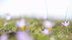 Flowers in spring sunshine Stock Footage